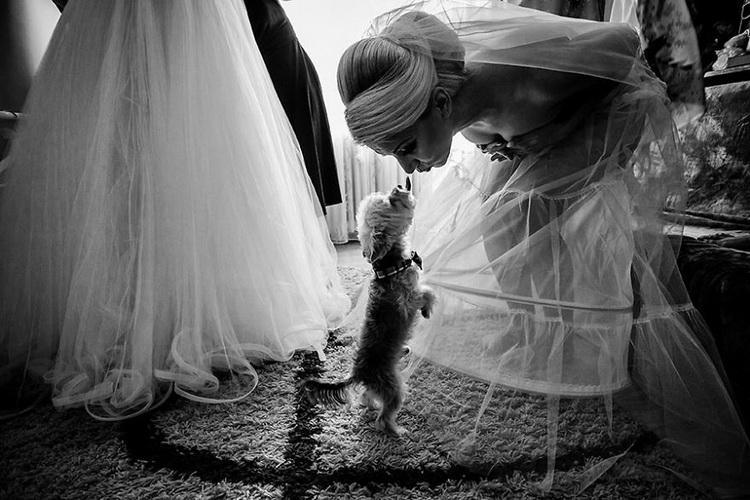 невеста целует собачку