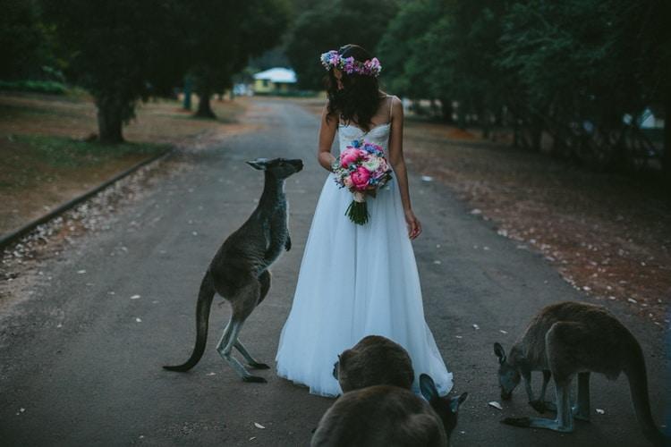 кенгуру подошли к невесте
