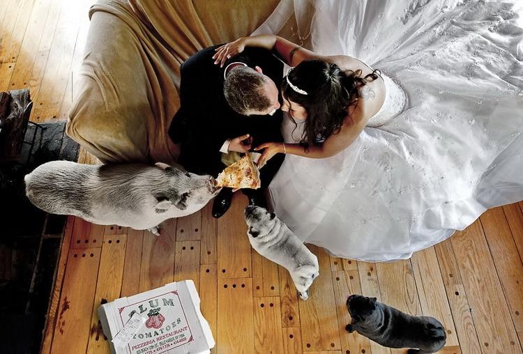 жених и невеста кормят свинью пиццей