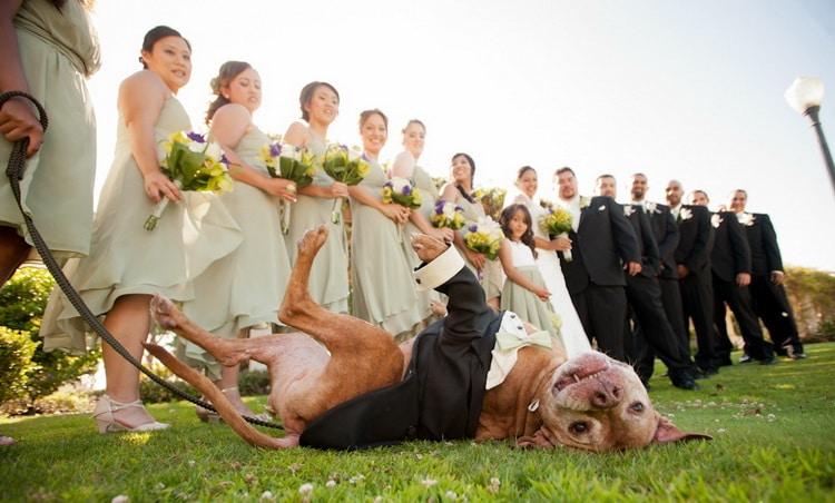 шаферы, подружки невесты, невеста, жених и пред ними собака на траве