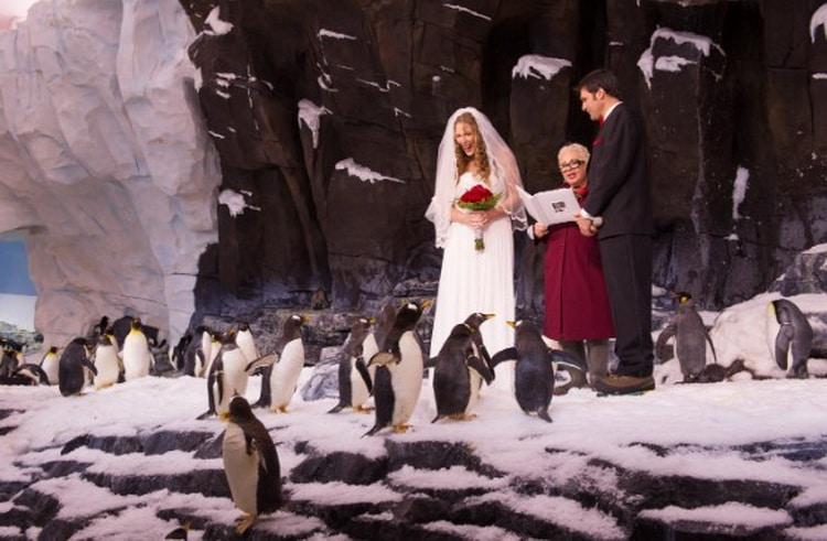 жених невеста пингвины