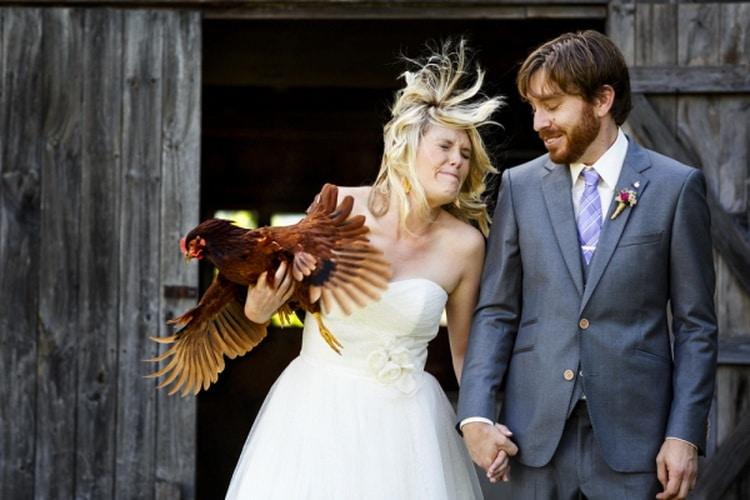 жених и невеста держит курицу