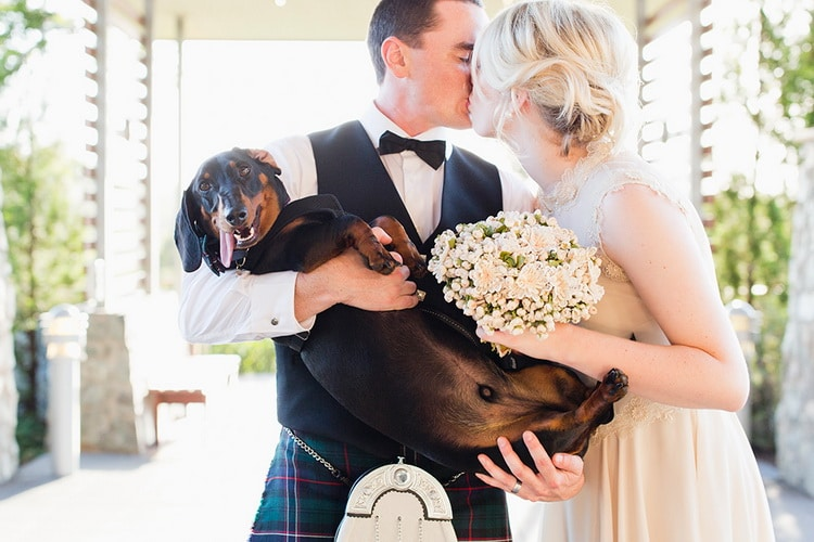 жених целует невесту и держит таксу
