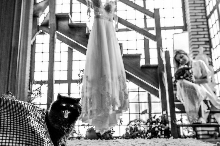 свадебное платье и черная кошка мяукает