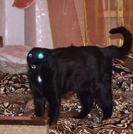 черный кот напуган
