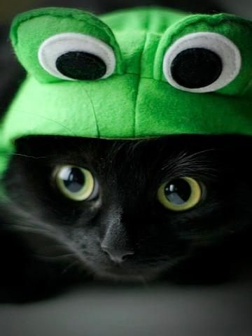 черный кот в шапке-лягушке