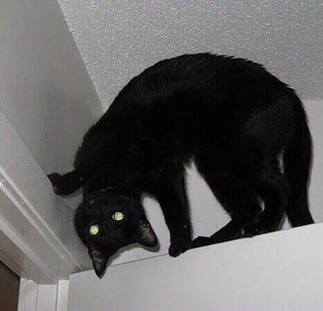 черный кот сидит на двери