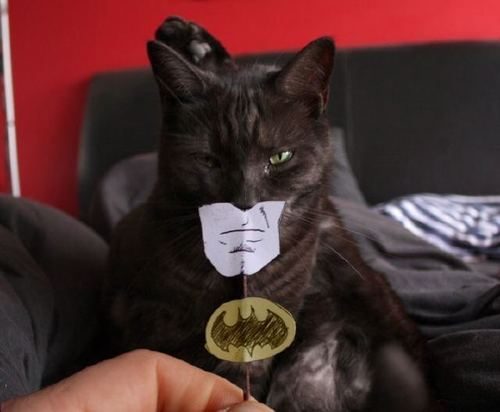черная кошка бэтмен