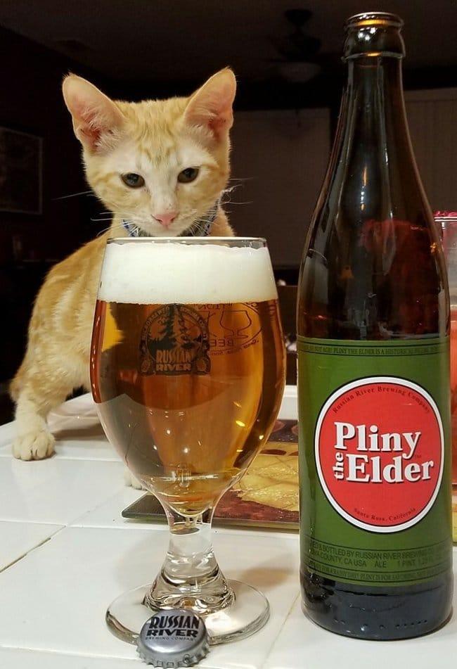 рыжий кот и бокал пива