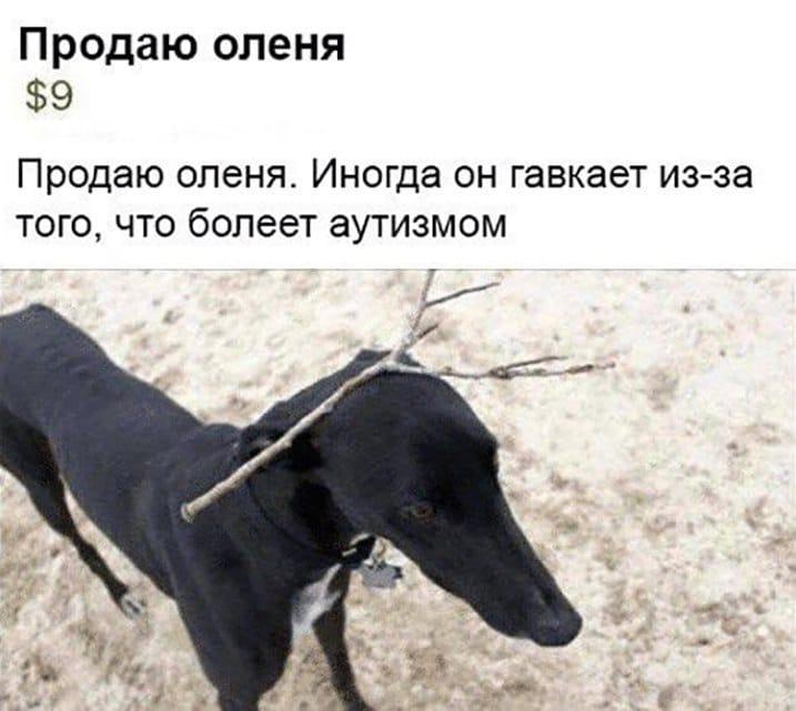 черная собака с веткой на голове