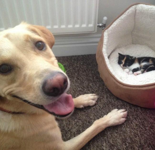 собака и котенок