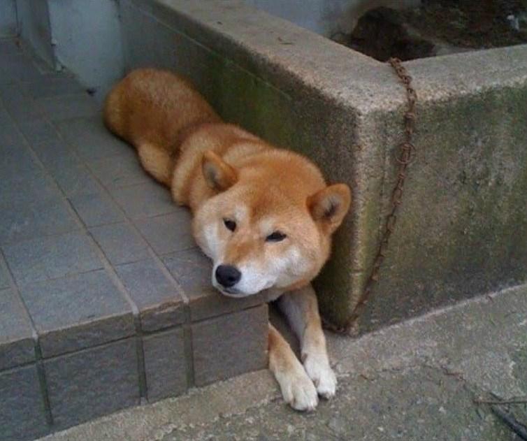 пес застрял в асфальте