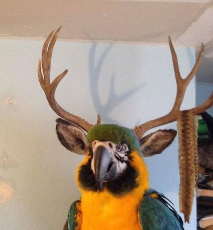 попугай с рогами