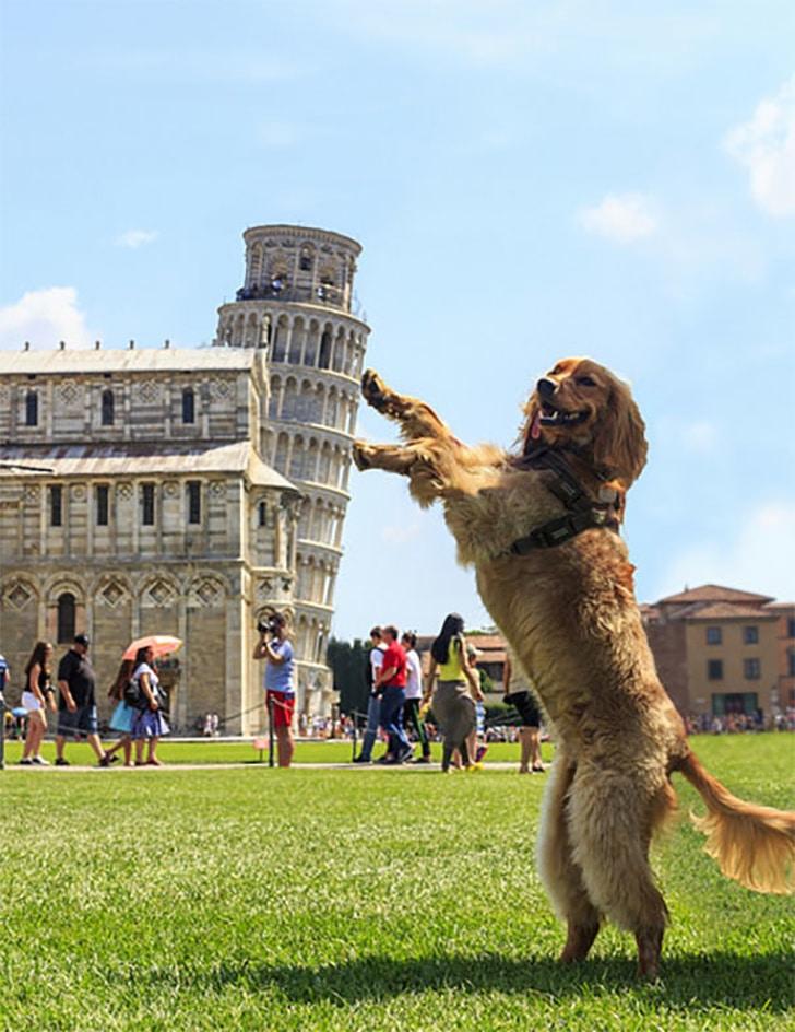 пес и Пизанская башня