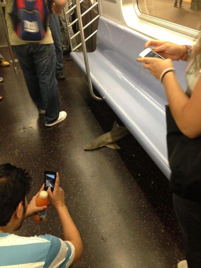 акула в метро
