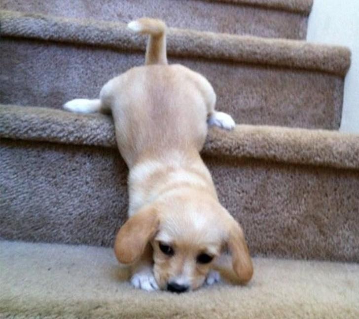 щенок упал с лестницы