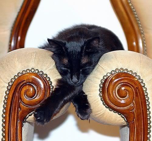 Кот между кресел