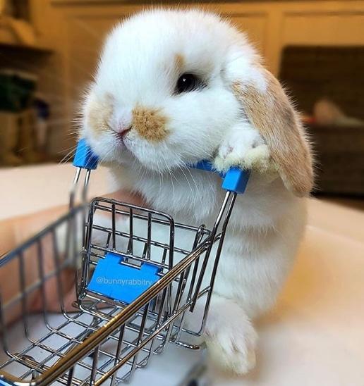 кролик с продуктовой тележкой