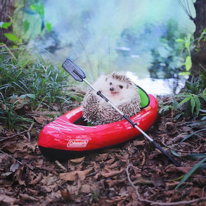 Ежик в лодке
