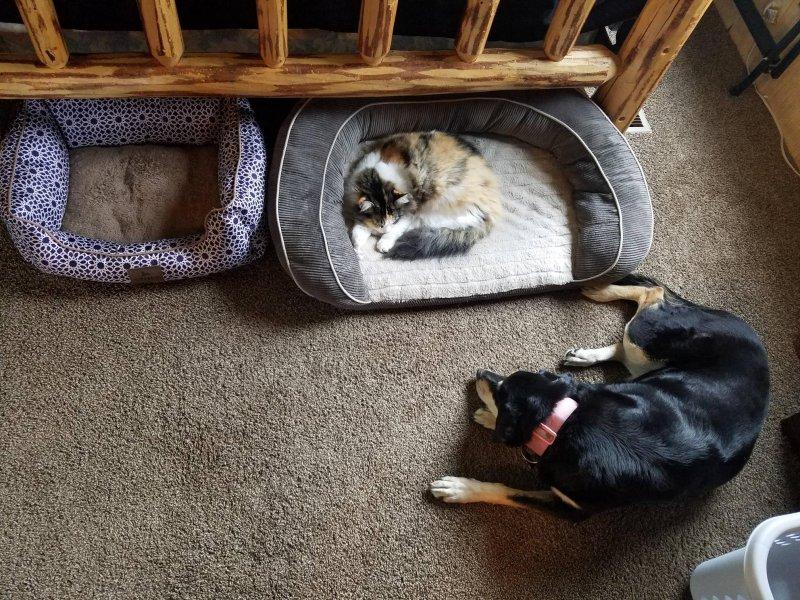 кот лежит на лежаке собаки