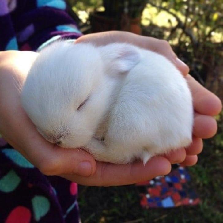 белый кролик спит на руках