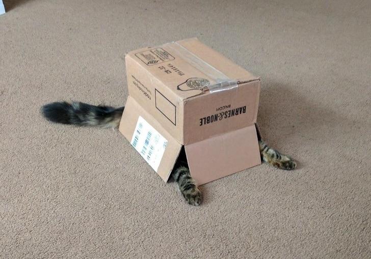 кот прячется под коробкой