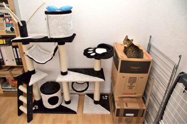 кошачий домик и кот на коробках
