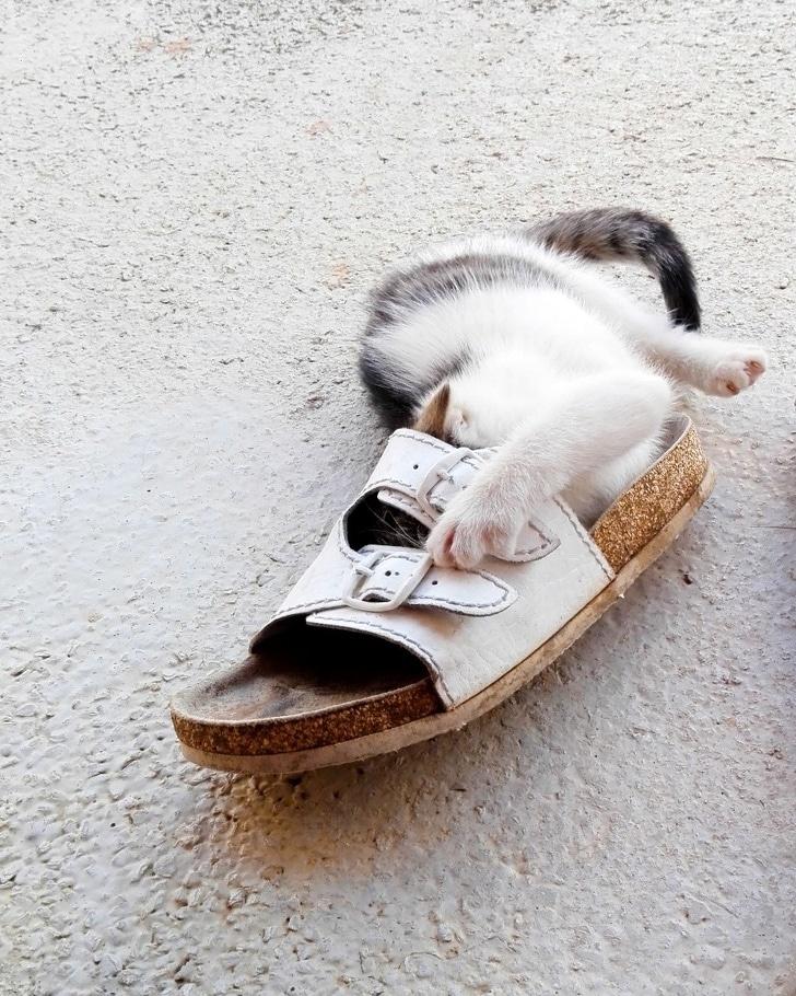 кот лежит в шлепанце