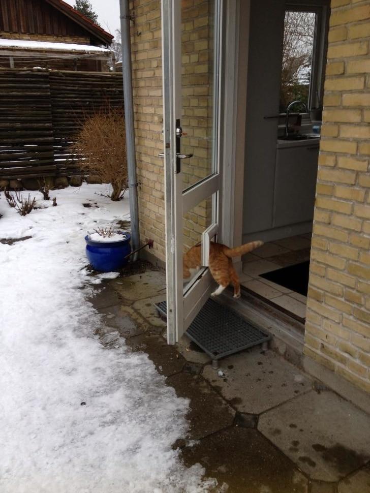 рыжий кот в дверях
