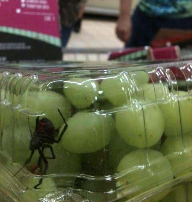 паук в упаковке