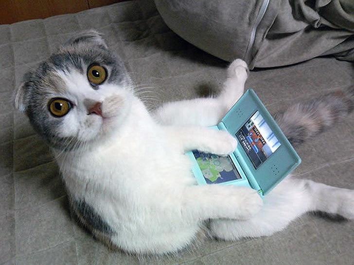 кот с планшетом