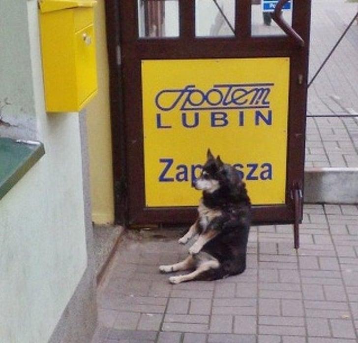 пёс сидит