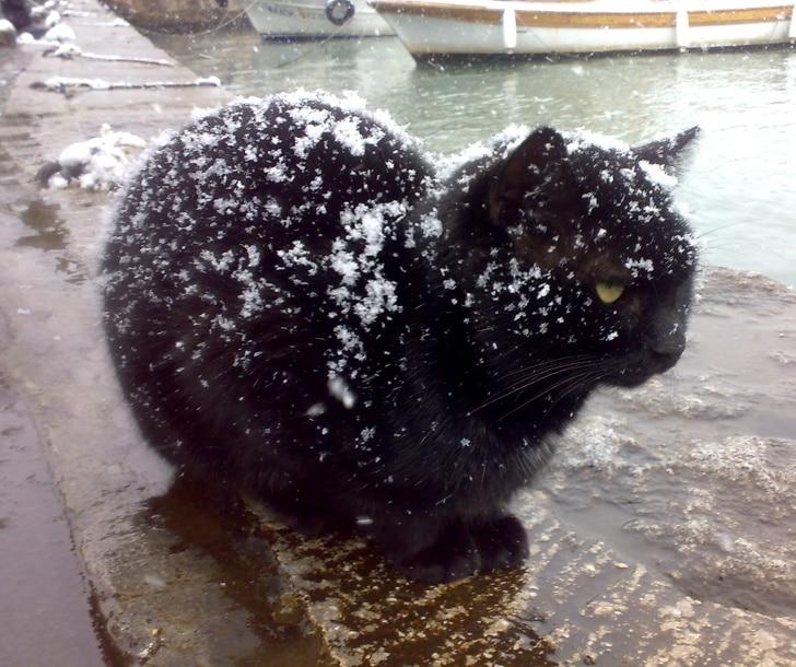 черный кот в снегу