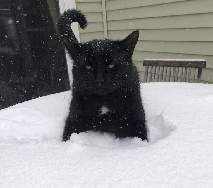 черный кот сидит в снегу