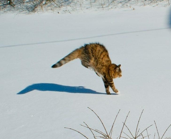 полосатый кот бежит по снегу