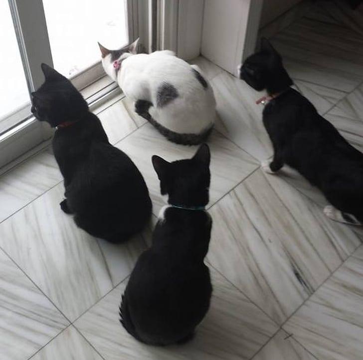 три черных кота и белая кошка