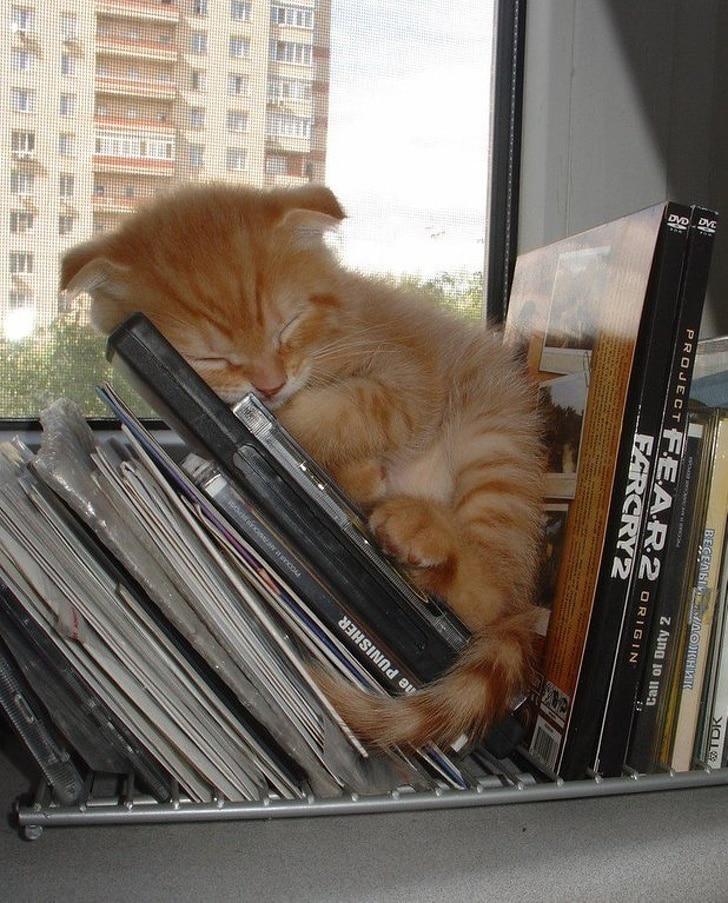 рыжий котенок спит на дисках