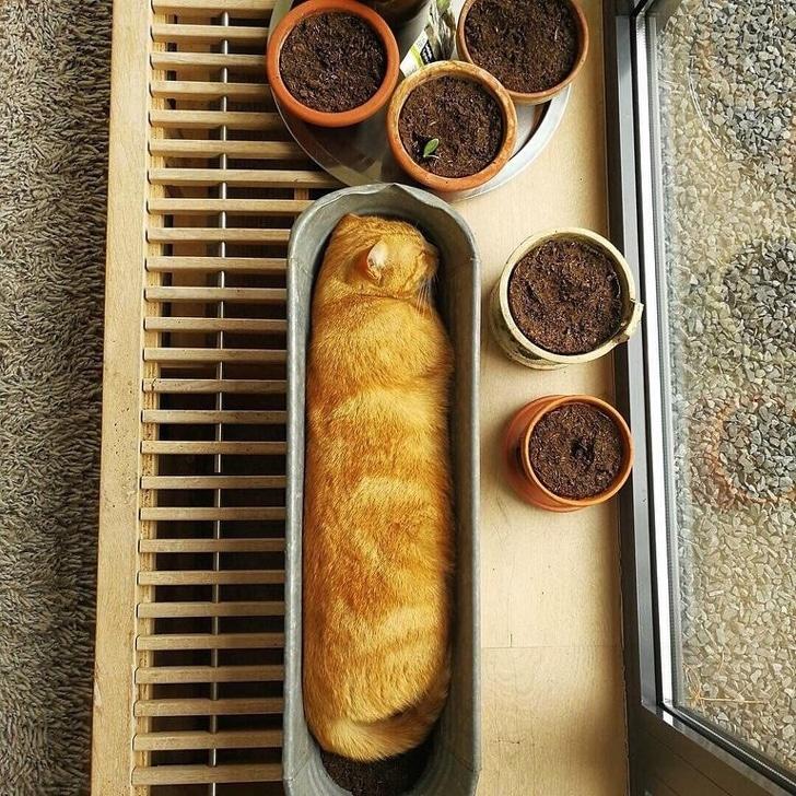 рыжий кот спит в горшке для цветов