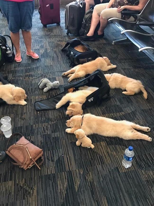 мохнатые собаки