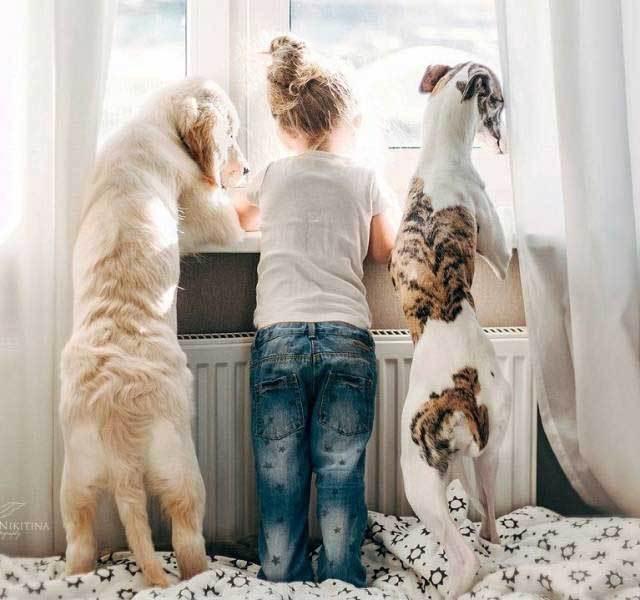 девочка с собаками у окна