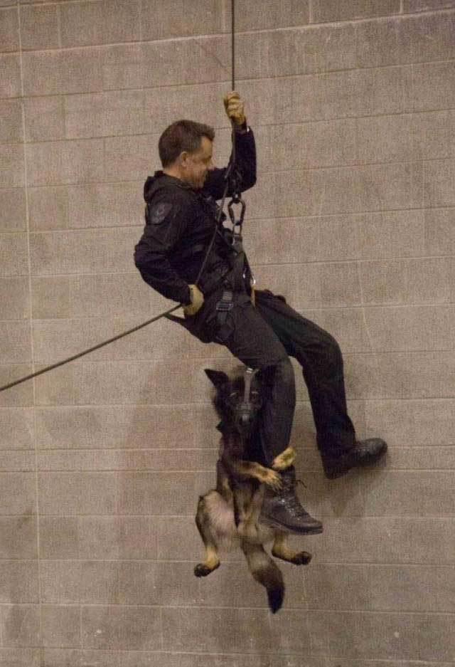 мужчина висит на канате с собакой