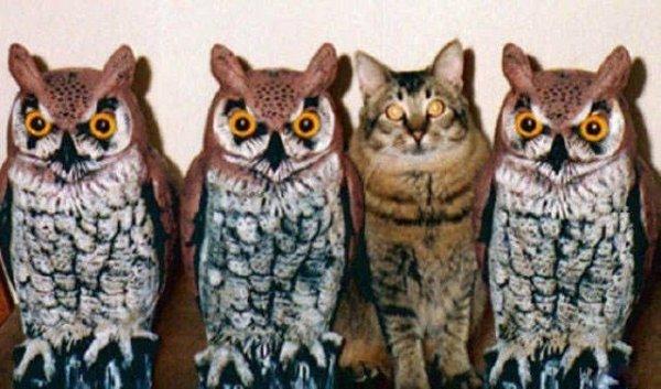 кот и три совы