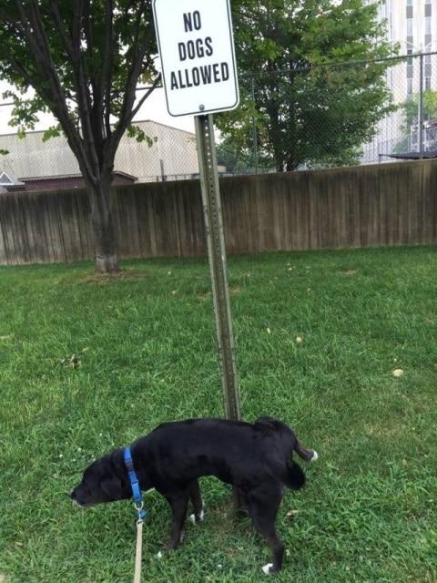 собака и табличка