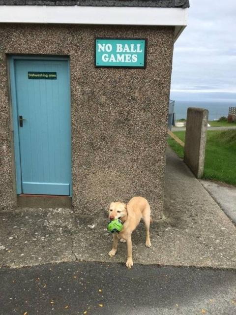 пес с мячом