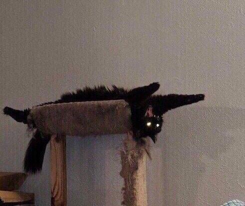 черная кошка лежит животом кверху