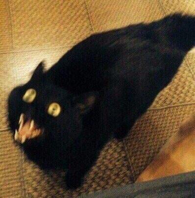 черный кот смазанная фотография