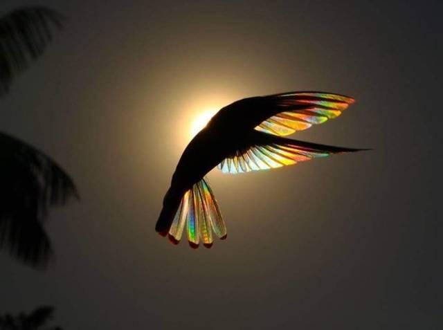 птица на фоне солнца