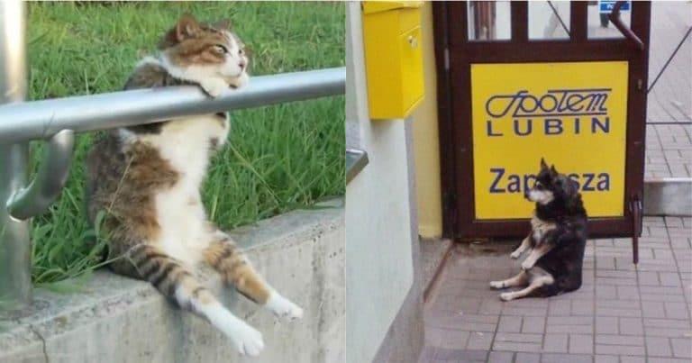 сидящие животные