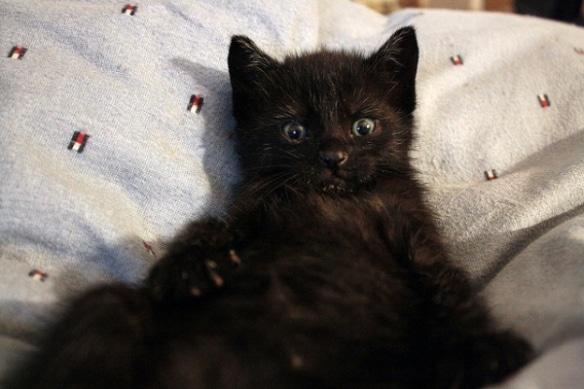 черный котенок на подушке
