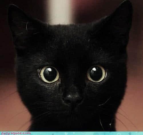 черный кот голова
